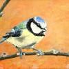Pimpelmees- 2010 * Acryl op doek canvaskarton - 12x16