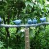 Tuinbeeld met 5 Mussen op tak - 2007 * geheel uitgevoerd in brons